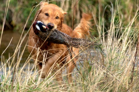 Top 10 Wonderful Hunting Dog Breeds